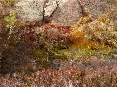 Lichens and mosses ...