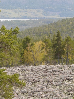 A field of small boulders left from the ice age ... can understand why the Swedes are into folklore as it looked just like a field of small trolls.