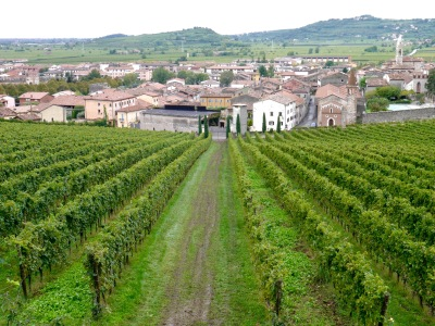 Vines now devoid of grapes, looking down to Soave