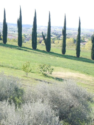 Fairly typical of the landscape: cypresses and olive trees, gentle hills.