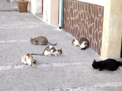 Food dropped from above the balcony ... the cats knew where to sit!